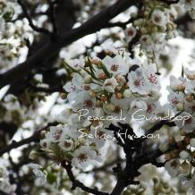 Just Lovely White Flower photo - 8 x 10 frame Print Art Photography